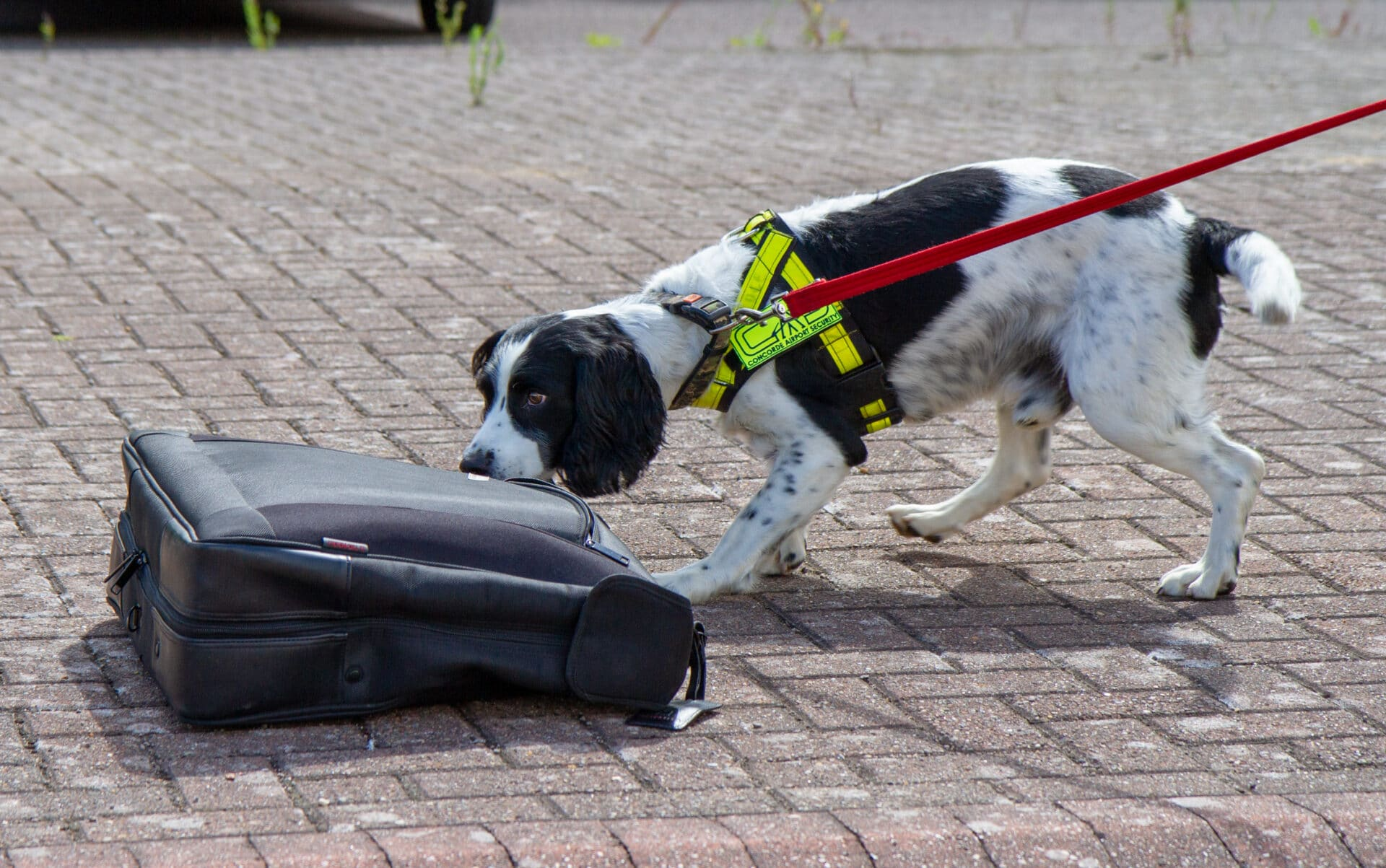 Sniffer Dogs - Concorde Airport Security